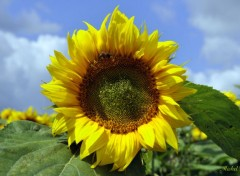Nature Tournesol