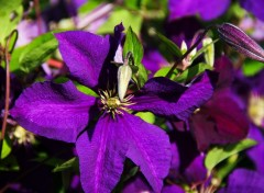 Nature jardin fleuri