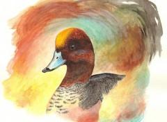 Animaux Canard siffleur