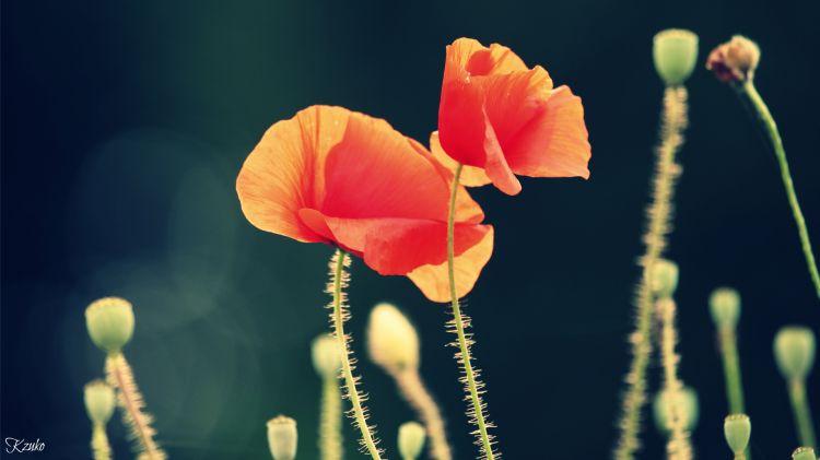 Fonds d'écran Nature Fleurs Wallpaper N°312540