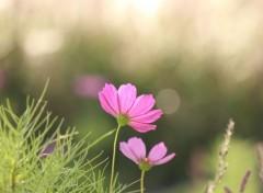 Nature petites fleurs