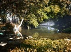 Nature Forêt de Chizé