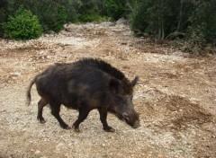 Animaux rencontre insolite en rando dans le Gard