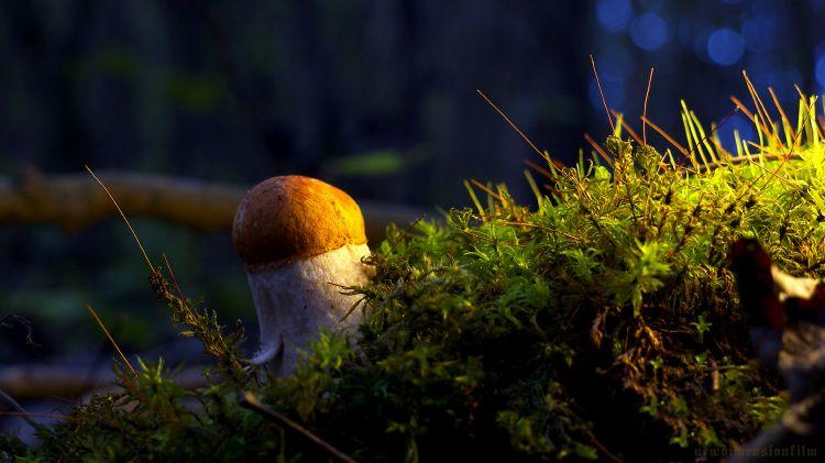 Wallpapers Nature Mushrooms Matin dans l'herbe 2.