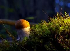 Nature Matin dans l'herbe 2.