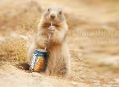 Art - Numérique Colette la Marmotte qui boit un Orangina