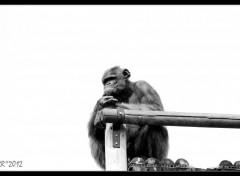 Animals Le singe pense!