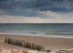 Nature la plage abandonnée