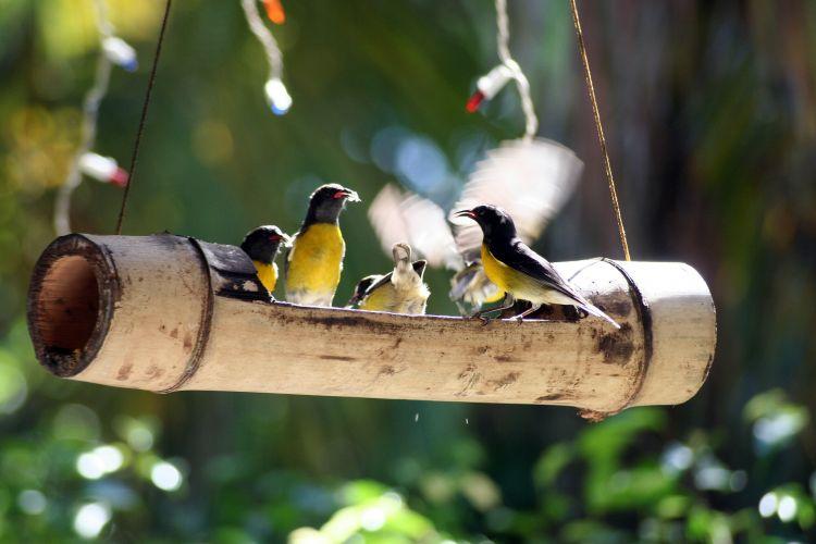 Fonds d'écran Animaux Oiseaux - Divers Wallpaper N°318624