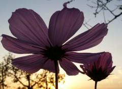 Nature Fleure sauvage