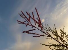 Nature Tamaris