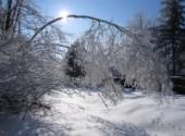 Nature le poid de l'hiver