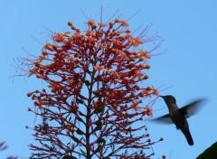 Animaux colibri