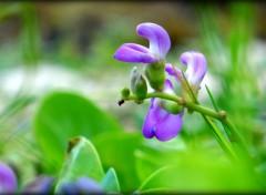 Nature petite fleur sauvage
