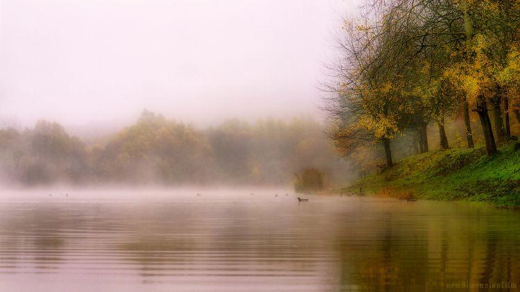 Wallpapers Nature Lakes - Ponds Canards dans la brume.