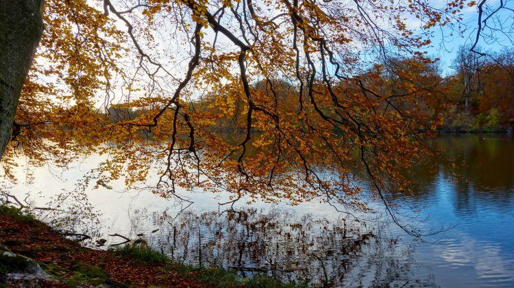 Fonds d'écran Nature Lacs - Etangs Automne sous un arbre