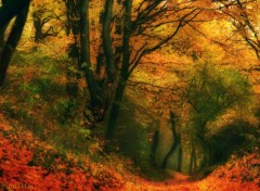 Nature Impressions d'automne 2012-5-de feu forêt.