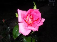 Nature Rose: essai de nuit