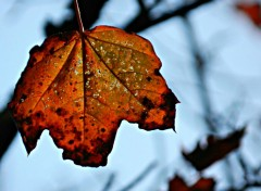 Nature feuille