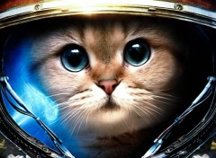 Video Games Starcraft Miaou