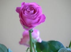 Nature Flores