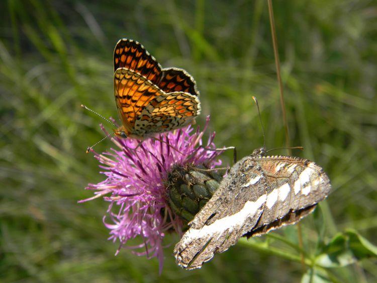 Fonds d 39 cran animaux fonds d 39 cran insectes papillons - Image d animaux gratuit ...