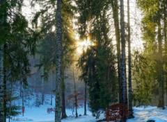 Nature Une étoile en hiver