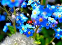 Animaux jardin du printemps