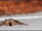 Animaux araignée méchante