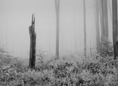Nature Sombre forêt 1.