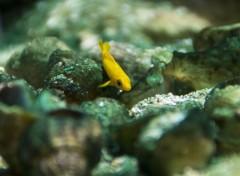 Animaux Petit poisson jaune