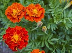 Nature Fleur à Ciloas