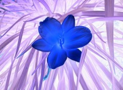 Nature rêve bleu