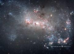 Espace Galaxie naine NGC 4449