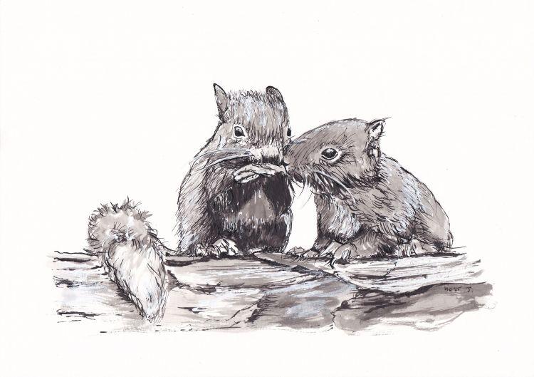 Wallpapers Art - Pencil Animals - Squirrels Ecureils