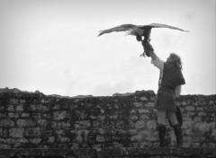 Animaux A vol d'oiseau