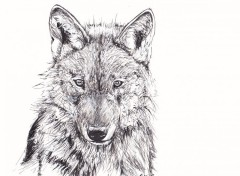 Art - Pencil Loup