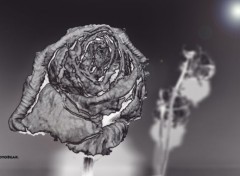 Nature Rose Black & White