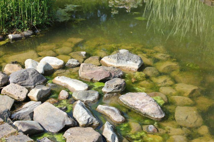 Fonds d 39 cran nature fonds d 39 cran fleuves rivi res torrents jardins du lac de bambois for Ecran de jardin belgique