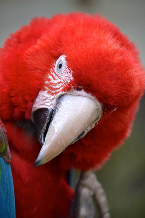Wallpapers Animals Birds - Parrots Le perroquet qui fait le beau