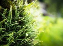 Nature Fern wall