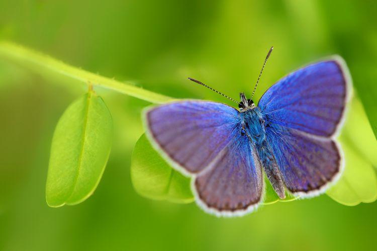 Fonds d'écran Animaux Insectes - Papillons Wallpaper N°352656