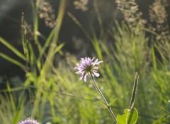 Nature fleur violette