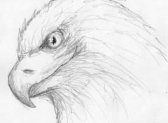 Art - Crayon Aigle