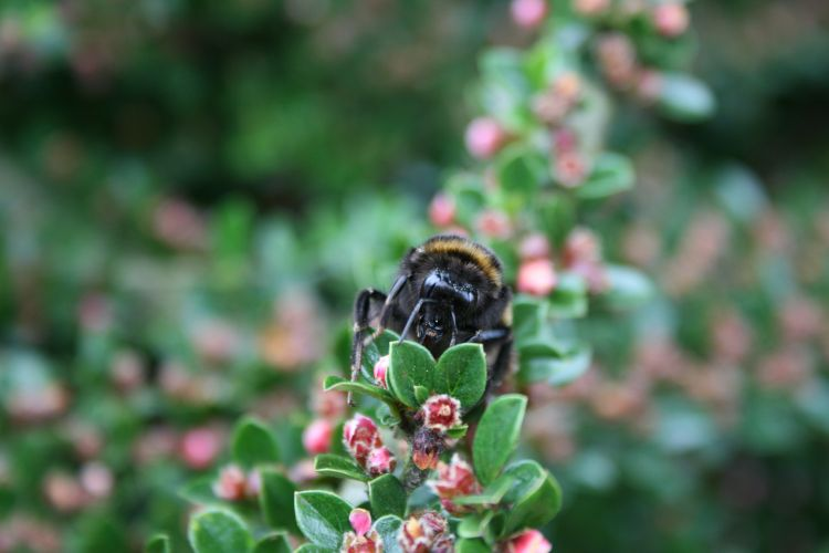 fonds d 39 cran animaux fonds d 39 cran insectes abeilles gu pes trop beau par f13fab. Black Bedroom Furniture Sets. Home Design Ideas