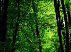 Nature Green Forest