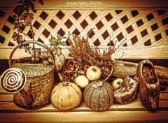 Nature Scène d'automne
