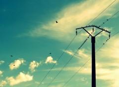 Nature Les oiseaux chantent et le soleil brille