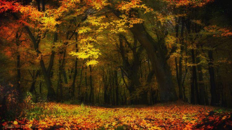Fonds d'écran Nature Arbres - Forêts Impressions d'automne 8/2013