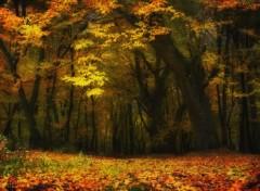 Nature Impressions d'automne 8/2013